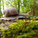 Ślimaki, a kapusta – jak ratować ogródek? ślimaki w kapuście pasożyty w ogrodzie