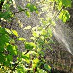 Delikatne środki ochrony roślin – które wybrać? deliktarne rośliny ochrona roślin
