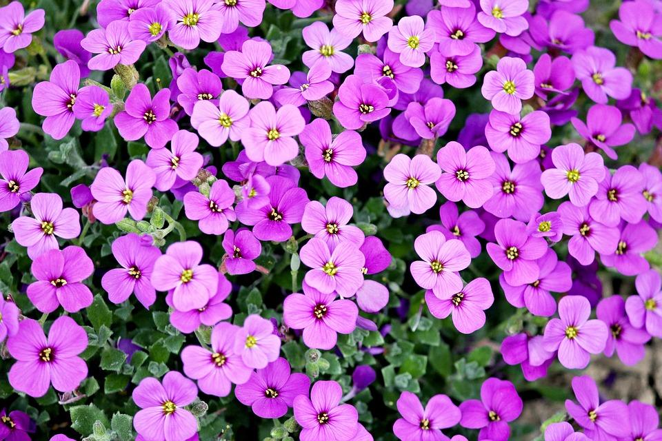 Jakie Kwiaty Sadzic Na Kwasnej Glebie Rosliny Kwasolubne Kwasne Nawozy Rosliny Ozdobne Zaawansowane Nawozy